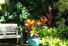 Aberdeen TAS Tropical landscaping 11