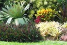Aberdeen TAS Tropical landscaping 9